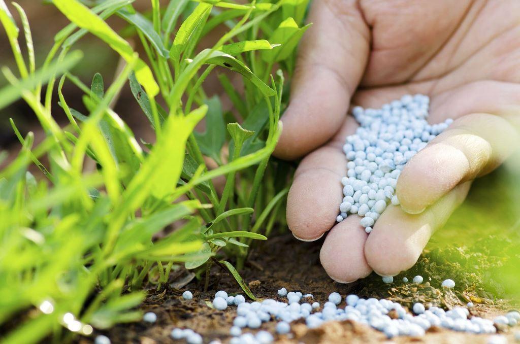 ingrosso fertilizzanti in calabria sarcone