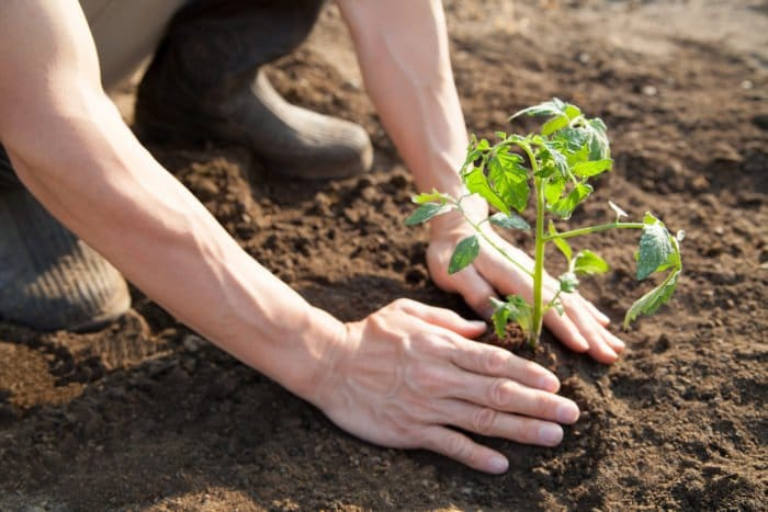 Ingrosso prodotti km0 cereali e legumi calabria