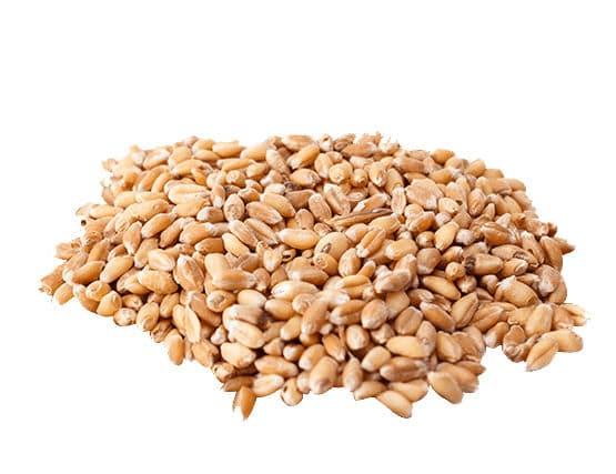 forniture grano calabria sarcone